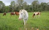 All rounder SOLD on HorseYard.com.au (thumbnail)