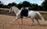 Talented Allrounder  on HorseYard.com.au (thumbnail)