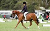 Show/Allrounder childs pony  on HorseYard.com.au (thumbnail)
