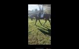 Lovely 16yo TB mare for sale on HorseYard.com.au (thumbnail)