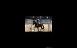 """""""Perfect peridot """" on HorseYard.com.au (thumbnail)"""