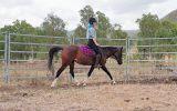 90% Reg Partbred Arab Mare on HorseYard.com.au (thumbnail)