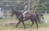Gorgeous TB Gelding on HorseYard.com.au (thumbnail)