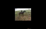 Jimmy  on HorseYard.com.au (thumbnail)