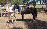 Alround pony/ part welsh on HorseYard.com.au (thumbnail)