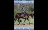 TB Gelding  on HorseYard.com.au (thumbnail)