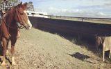 Bringing Sexy Back  on HorseYard.com.au (thumbnail)