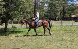 9 y/o bay standardbred gelding on HorseYard.com.au (thumbnail)