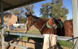 Great Allrounder  on HorseYard.com.au (thumbnail)