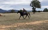 Eventing prospect on HorseYard.com.au (thumbnail)