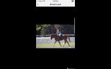 Australian Riding Pony on HorseYard.com.au (thumbnail)