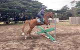 Quite, Unraced & Retrained TB on HorseYard.com.au (thumbnail)