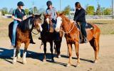 Apache Quiet ASH X QH GELDING  on HorseYard.com.au (thumbnail)