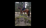 Extremely quiet Tb pony club adult riders mount  on HorseYard.com.au (thumbnail)