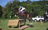 Vienna Akima on HorseYard.com.au (thumbnail)