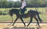 Talented, athletic mare on HorseYard.com.au (thumbnail)