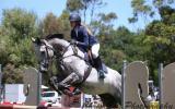 Grey Thoroughbred on HorseYard.com.au (thumbnail)