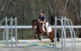 Gorgeous natured mare on HorseYard.com.au (thumbnail)