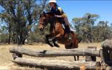 Gorgeous Riding Pony X Welsh Pony on HorseYard.com.au (thumbnail)