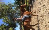 Quarter horse cross  on HorseYard.com.au (thumbnail)