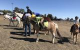 Buckskin Tobiano pony mare  on HorseYard.com.au (thumbnail)