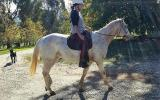Show Quality Appaloosa Gelding on HorseYard.com.au (thumbnail)