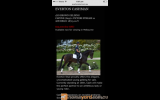 Free lease of a AWHA approved mare on HorseYard.com.au (thumbnail)