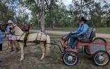Harness pony on HorseYard.com.au (thumbnail)