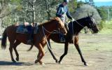 Hard Working Stock Horse Gelding + VIDEO++ on HorseYard.com.au (thumbnail)
