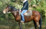 Tough Working Stock Gelding + VIDEO+ on HorseYard.com.au (thumbnail)