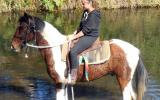 Tri Colour Paint Gelding + VIDEO++ on HorseYard.com.au (thumbnail)