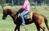 Quiet Red QH Gelding + VIDEO++ on HorseYard.com.au (thumbnail)