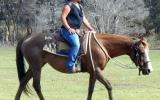Quiet Taffy QH Mare + VIDEO++ on HorseYard.com.au (thumbnail)
