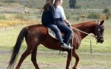 Fun Farm Kids Stock Mare on HorseYard.com.au (thumbnail)