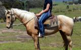 Pretty  Golden Palomino QH Mare on HorseYard.com.au (thumbnail)