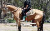 Pretty Buckskin QH Gelding +VIDEO++ on HorseYard.com.au (thumbnail)