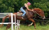 Stylish Red Aust Stud Book Gelding on HorseYard.com.au (thumbnail)