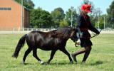 5yo gelding on HorseYard.com.au (thumbnail)