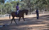 Sanlirra Flashlight on HorseYard.com.au (thumbnail)