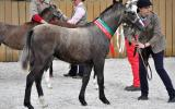 Tooravale Hannarina on HorseYard.com.au (thumbnail)