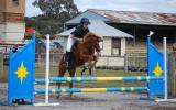 Troy on HorseYard.com.au (thumbnail)