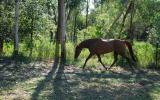 Exquisite Broodmare and Foal at Foot on HorseYard.com.au (thumbnail)