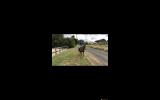 For sale  on HorseYard.com.au (thumbnail)