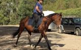 CLEO - super quiet mare  on HorseYard.com.au (thumbnail)