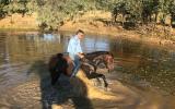 Quiet gelding  on HorseYard.com.au (thumbnail)