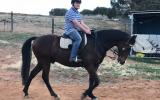 Adults ASH Gelding on HorseYard.com.au (thumbnail)