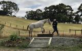 Appaloosa mare on HorseYard.com.au (thumbnail)
