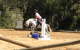 Registered Australian Pony Gelding on HorseYard.com.au (thumbnail)