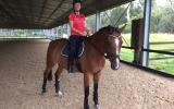 Big softy Warmblood for lease on HorseYard.com.au (thumbnail)
