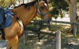 ME OL CHINA 0414 934 227 on HorseYard.com.au (thumbnail)